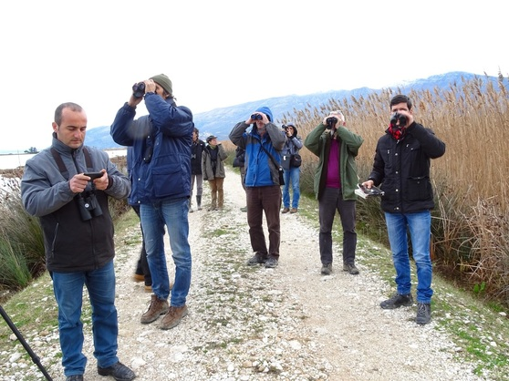International Waterbird Census in Albania, January 14-25, 2016