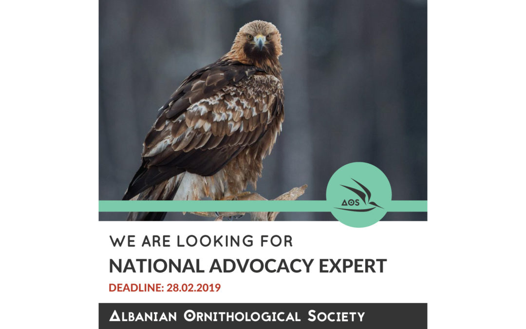 National Advocacy Expert