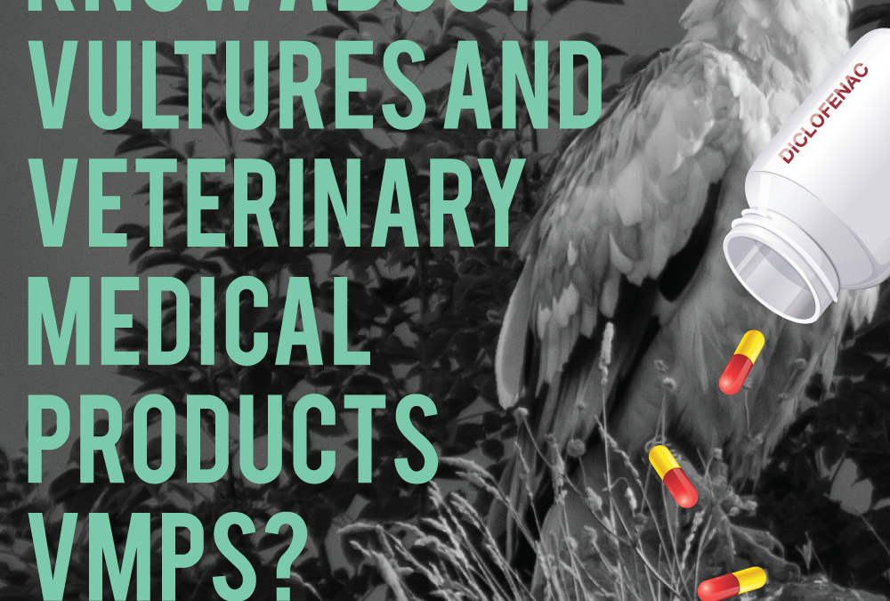 Identify and evaluate the use of veterinary drugs affecting the Egyptian Vulture