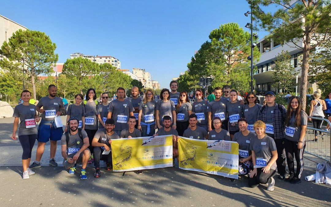 "The Egyptian Vulture stole the spotlight of the ""Tirana Half Marathon""!"