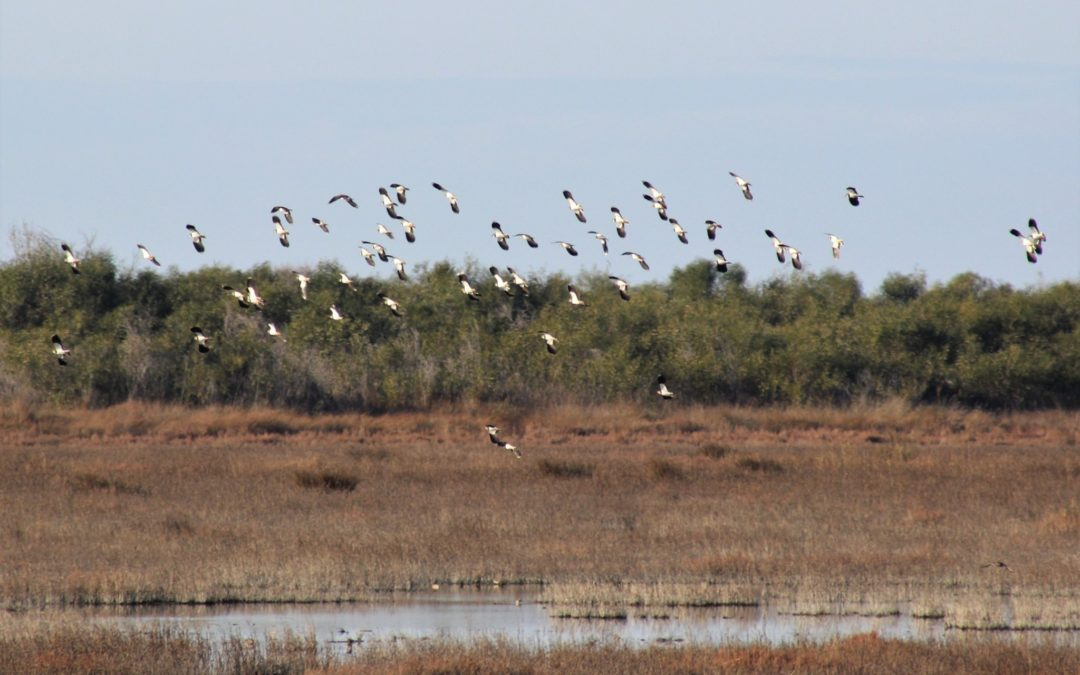 Completed : International Waterbirds Census 2020 in Albania ✔️