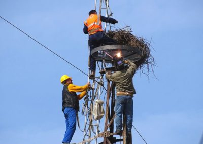 Figure no.3, 4: The installation of the breeding platform with the OST team (2019).