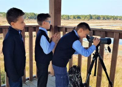 Observing the Pelican Island