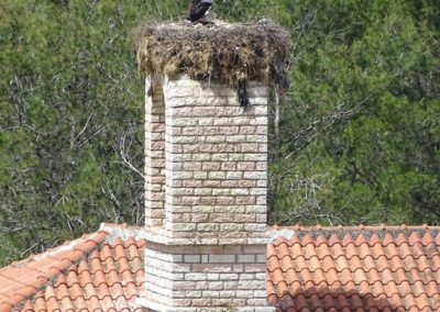 WhiteStorks in southern Albania ©Taulant Bino (2)