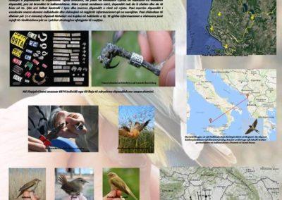 Bird Ringing in Albania 2014-2017