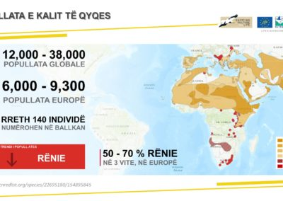 Egyptian Vulture population in global scale.