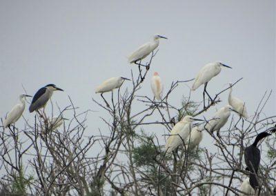Herons and Cormorants