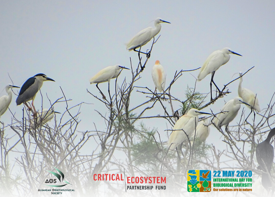 A glimpse of the colony of Herons and Cormorants Breeding in Divjaka