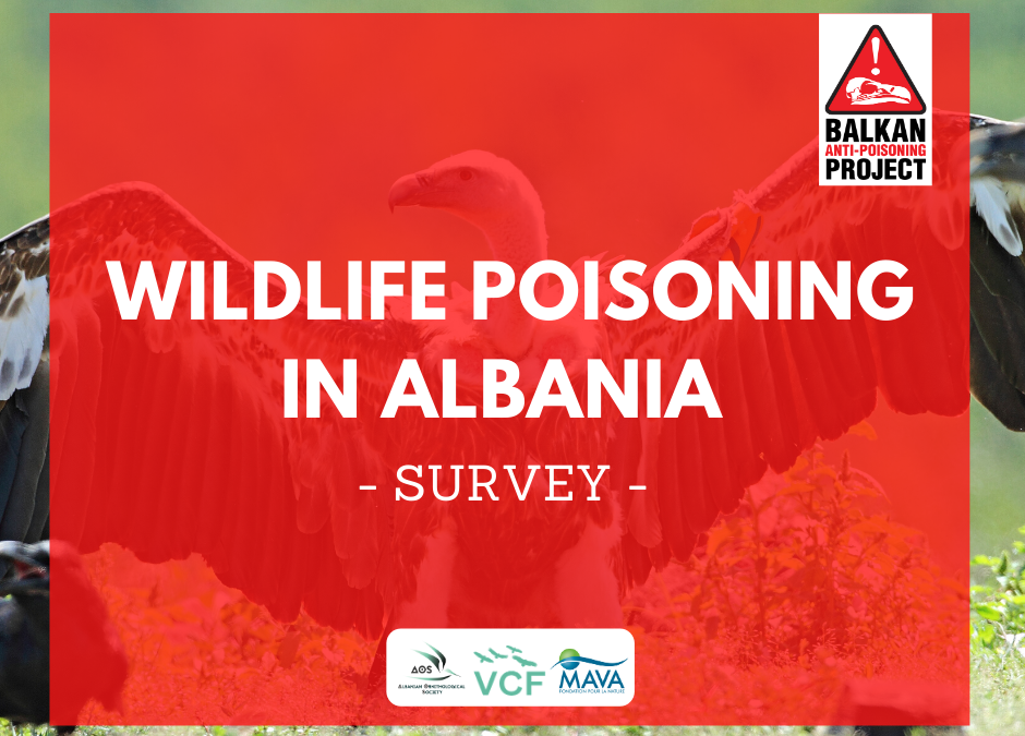 Take a moment to fill out the survey on wildlife poisoning in Albania