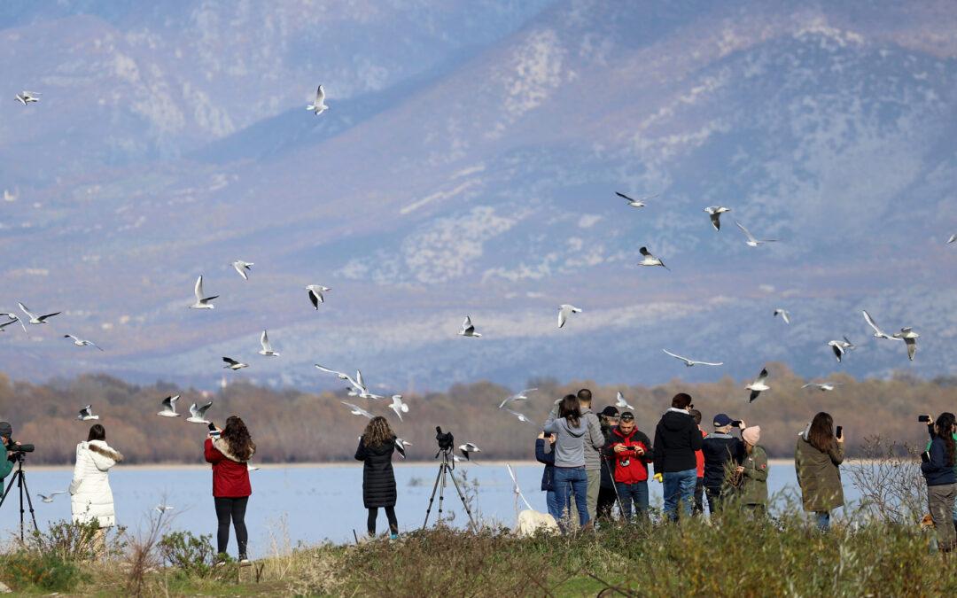 """In Shkodra with """"BirdID 2020 Albania"""""""