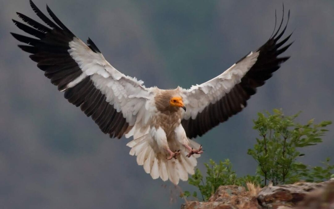 The fourth issue of the Egyptian Vulture New LIFE project e-newsletter