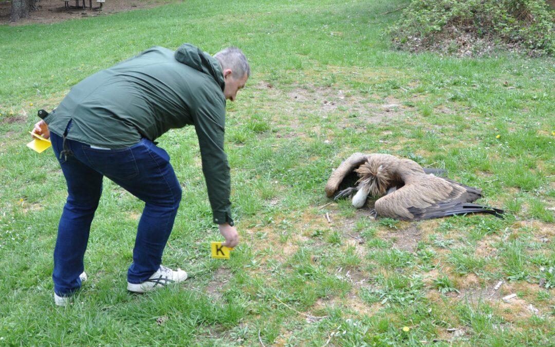 Wildlife Crime Academy: first training starts in one week